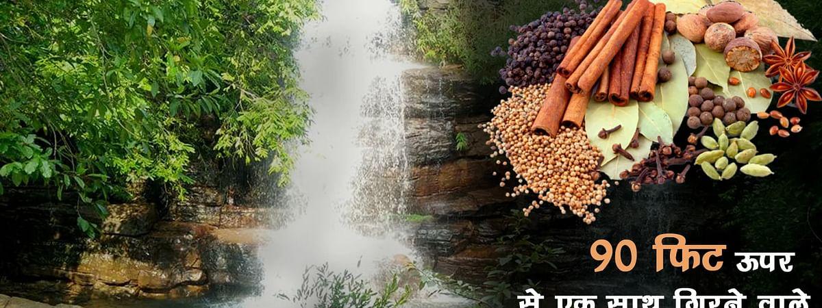 नानुपुरा झोत के जंगल में प्रकृति का अनूठा सौंदर्य
