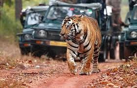 टाइगर रिजर्व में बढ़ी वाहन संख्याओं पर लगाई रोक