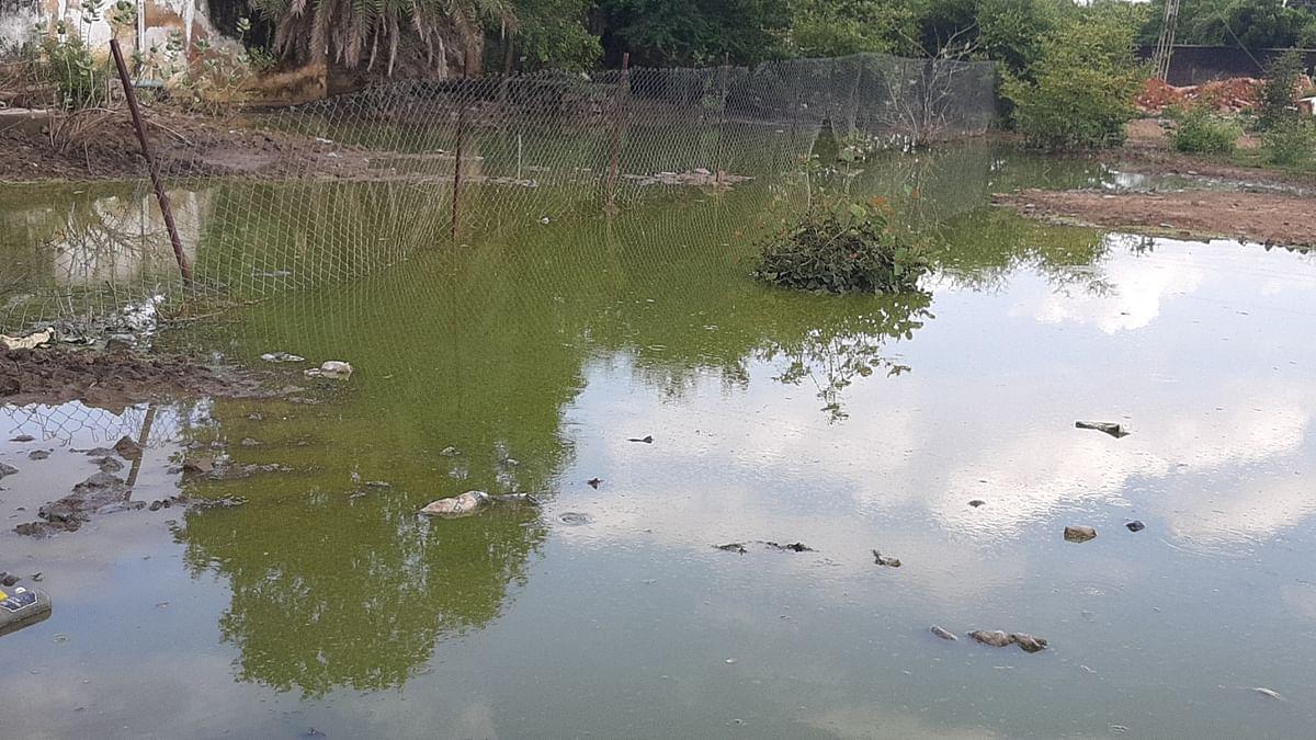 छतरपुर : खाली पड़े प्लाटों में जलभराव से जानलेवा बीमारियों का खतरा बढ़ा