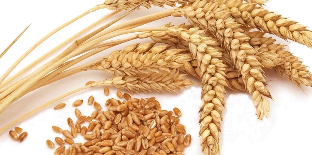 मोदी सरकार का दिवाली पर किसानों को तोहफा , एमएसपी में की वृद्धि