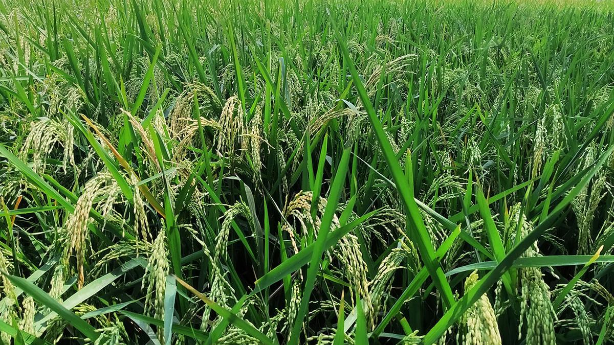 सिंगरौलीः कृषि विभाग के प्रयासों से किसानों की होगी बंपर कमाई