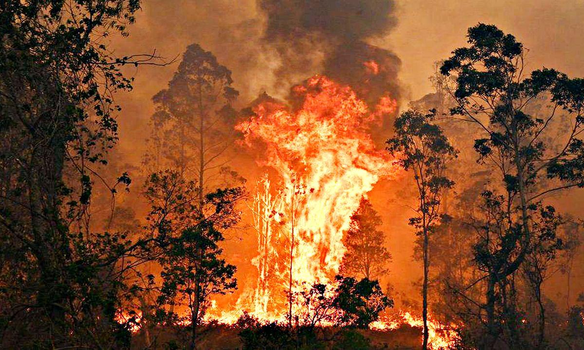भीषण आग की लपटों में जल रहा है ऑस्ट्रेलिया