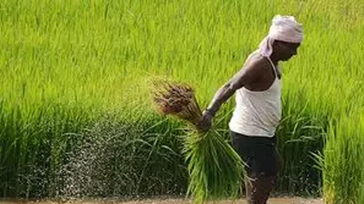 अतिवृष्टि ने की किसानों की फसलें खराब