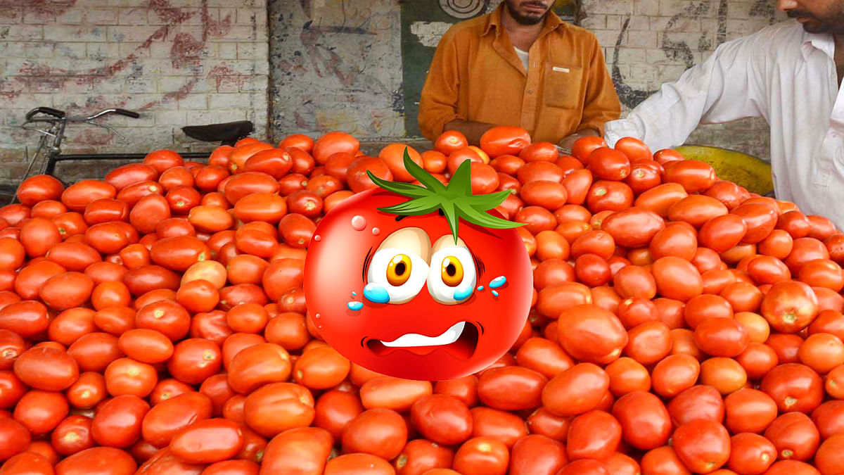 Tomato Price in Pakistan