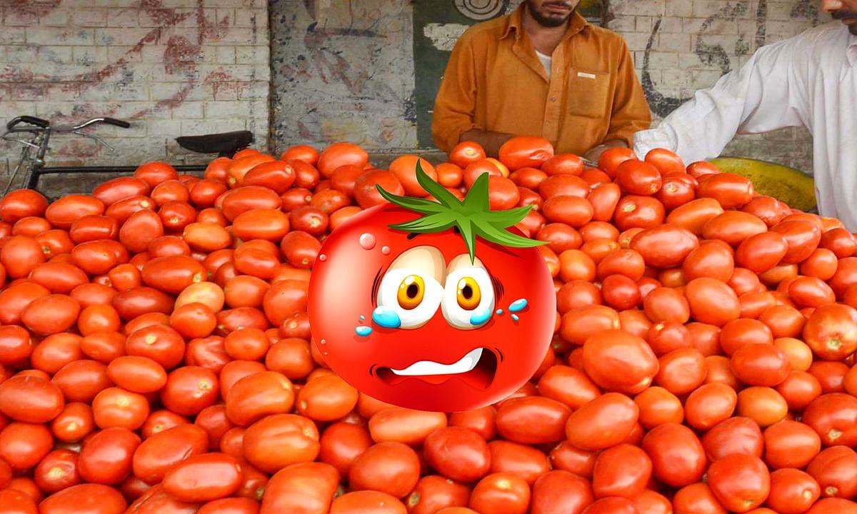Tomato Price in Pakistan