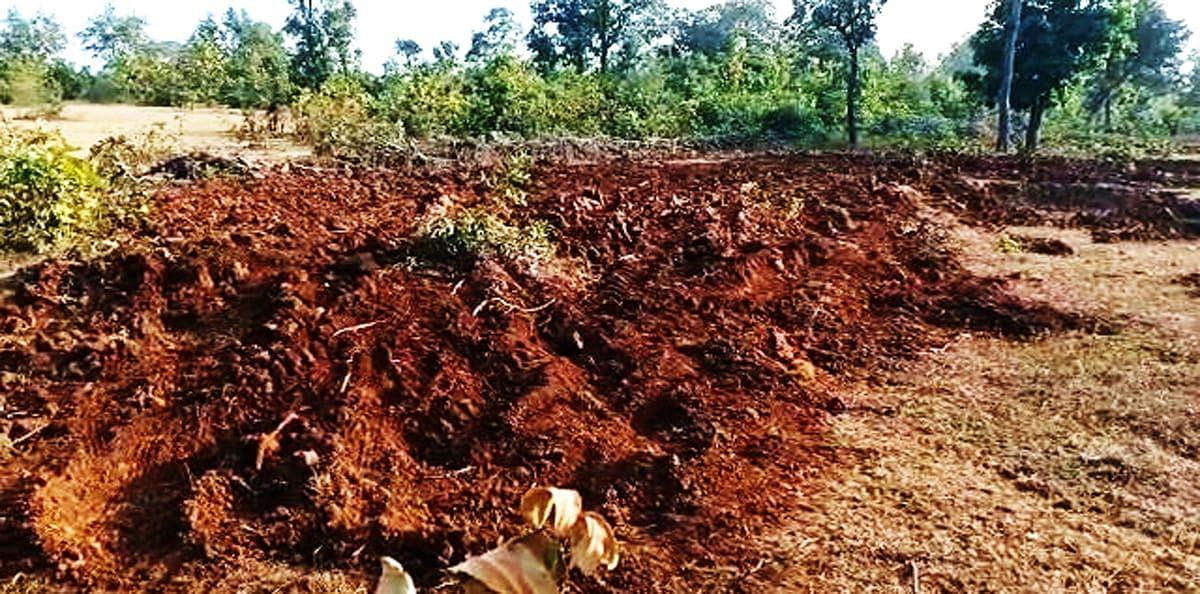 वनो के सुधार और संरक्षण पर करोड़ो रूपये विभाग खर्च