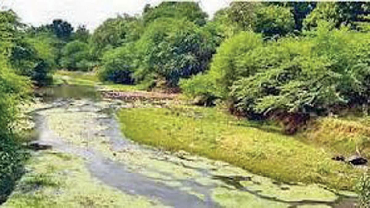 शहडोल: सोन की जल गुणवत्ता को नाले ने किया दूषित