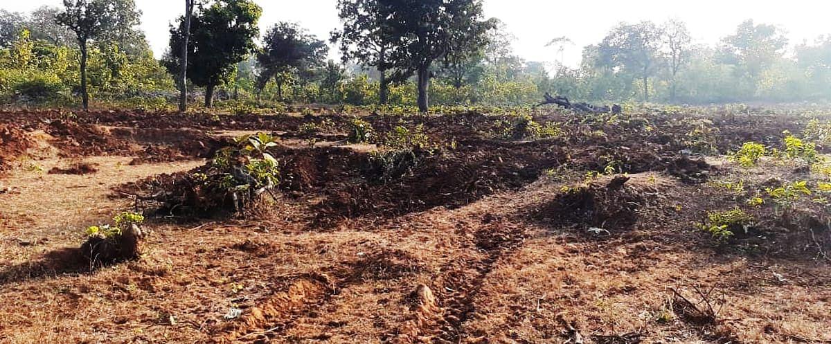 वनों के सुधार और संरक्षण पर करोड़ों रूपये विभाग खर्च
