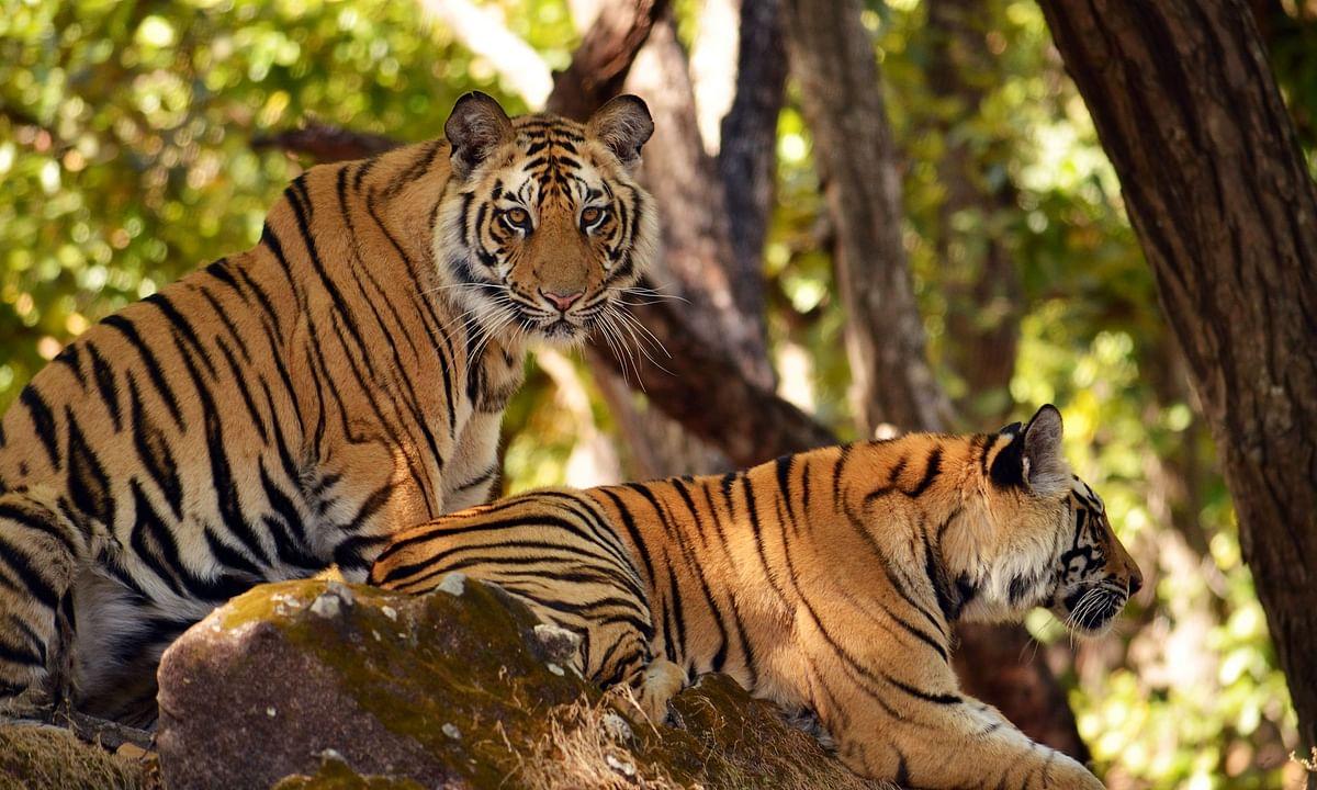 शिकारियों पर नकेल कसने टाइगर रिजर्व के संचालक ने दिए निर्देश
