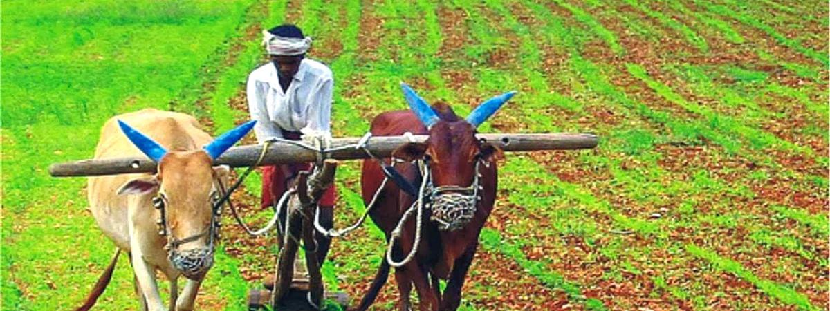 Indian Farmers