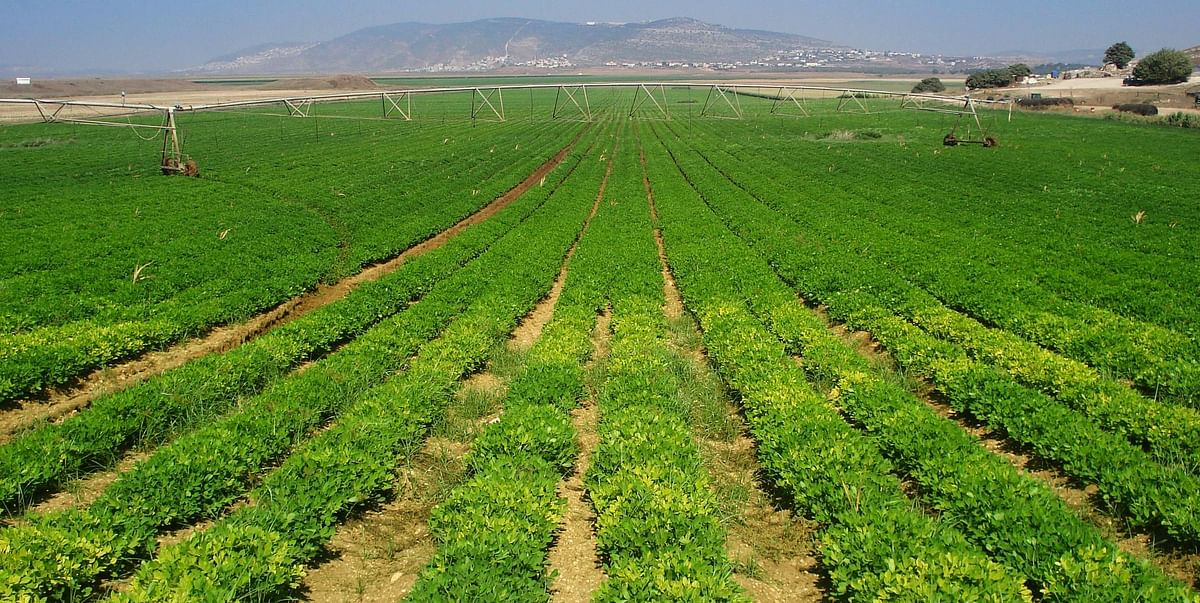 मप्र : मुख्यमंत्री की अध्यक्षता में कृषि सलाहकार परिषद का हुआ गठन