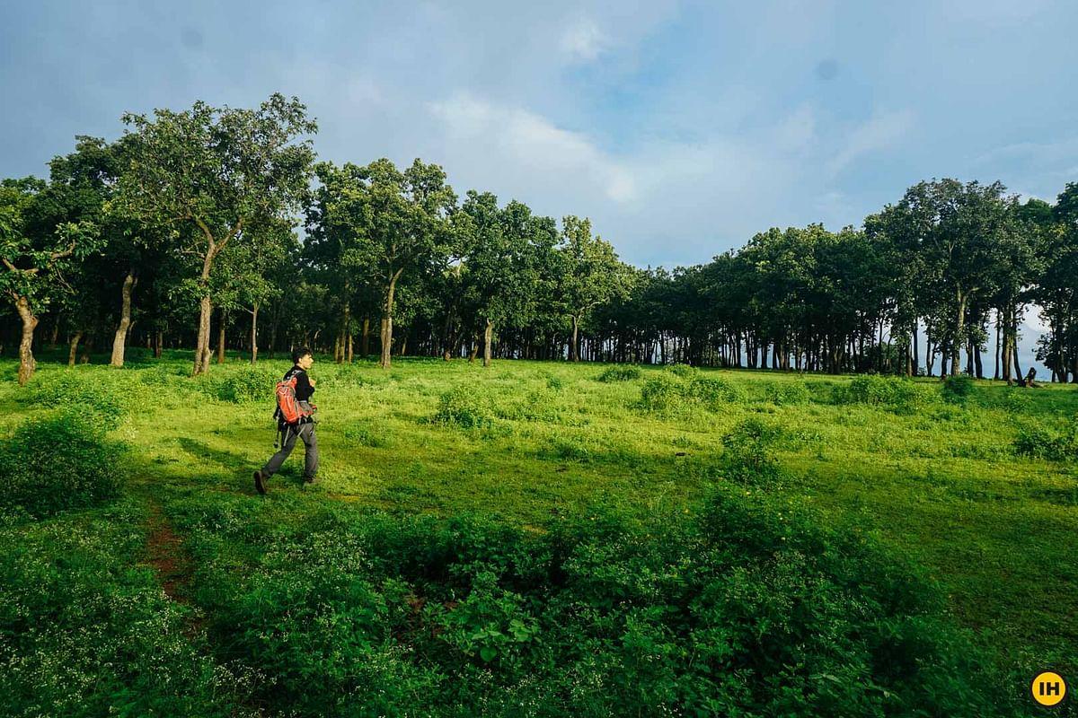 मध्य प्रदेश में आबादी के अनुपात में 400 करोड़ पौधरोपण जरूरी