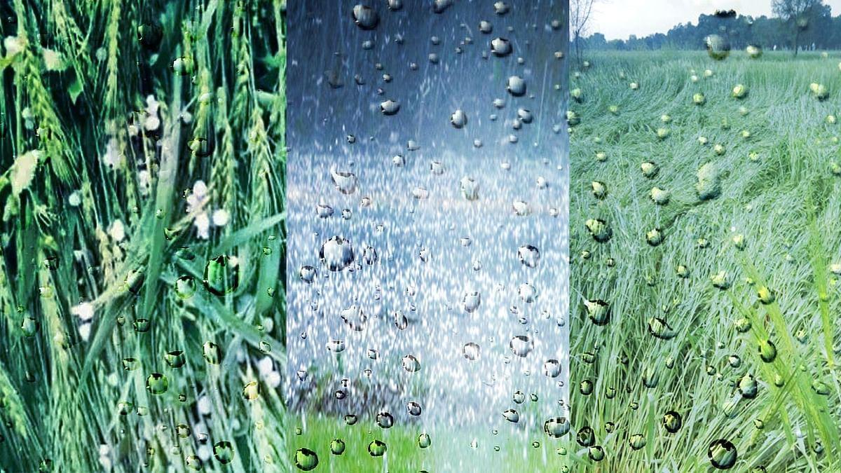 फसलों पर भारी पड़ी मौसम की मार, आगे भी आसार ठीक नहीं