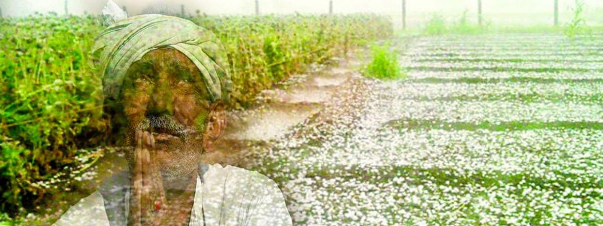 ओलों की मार से किसान परेशान