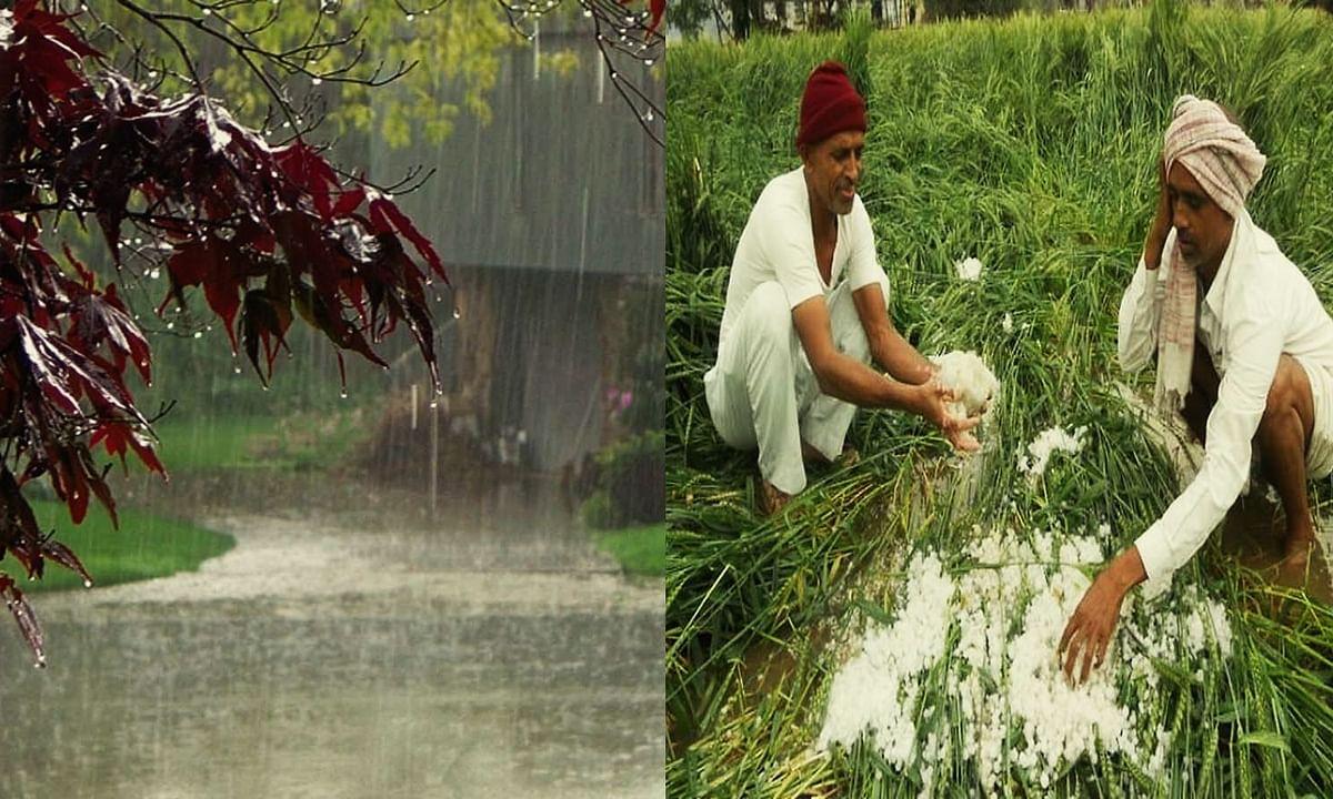 MP-बेमौसम बारिश ने मचाया हाहाकार: फसलों पर ठण्ड, बारिश, ओला की मार