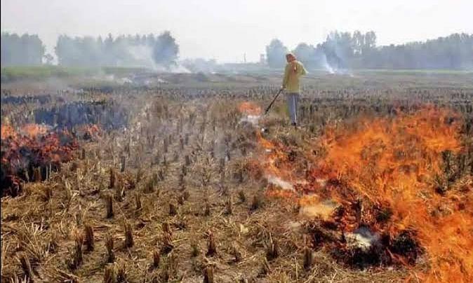 खेतों में नरवाई जलाने पर धारा 144 के तहत होगी कार्यवाही