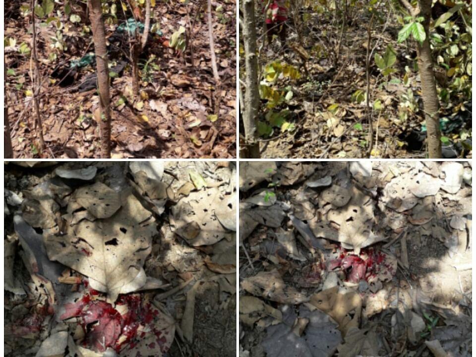 आदमखोर बाघ के कारण लापरवाह वन विभाग पर फूटा ग्रामीणों का गुस्सा