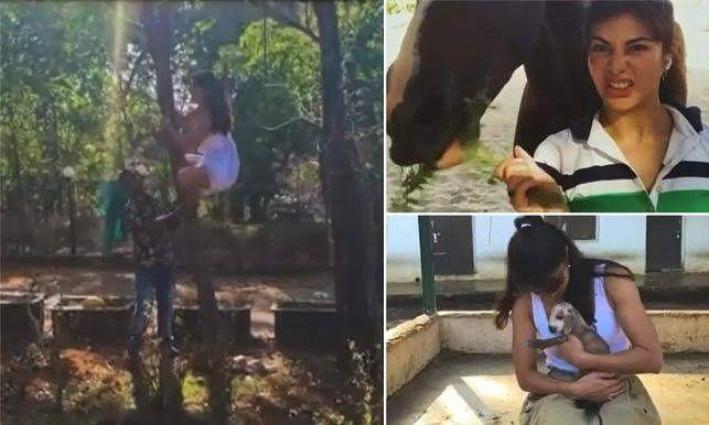 सलमान खान के फार्महाउस पर जैकलीन ने बनायीं शार्ट फिल्म, देखें वीडियो