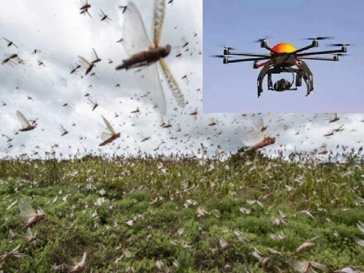 देश में टिड्डियों को रोकने के लिए  ड्रोन से होगा कीटनाशक का छिड़काव