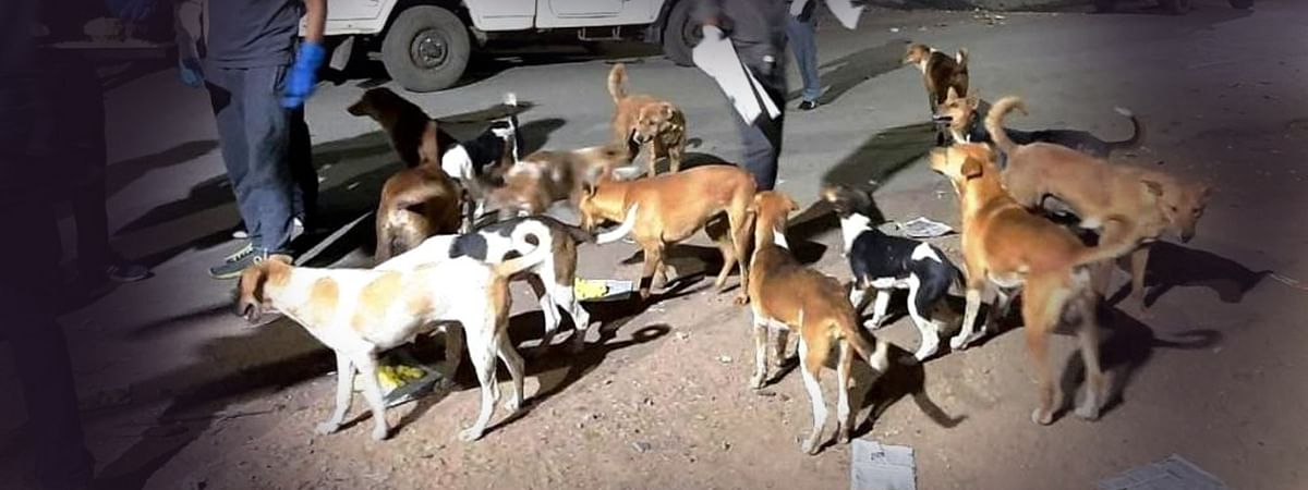 श्वानों को भोजन करवा बचा रहा इंसानों की ज़िन्दगी