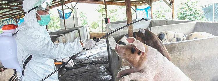 Swine flu virus found in China