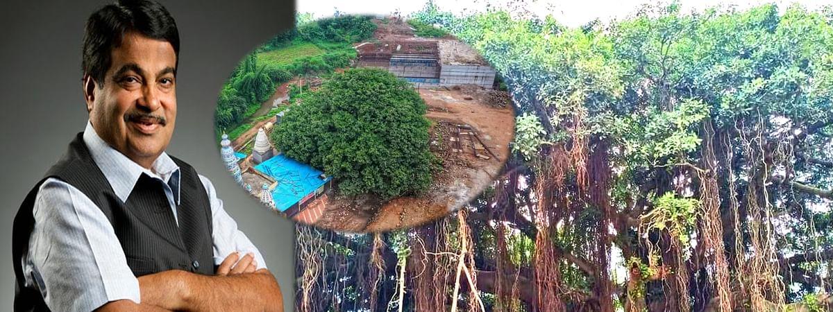 Nitin Gadkari changed maharashtra sangli highway map for save banyan tree