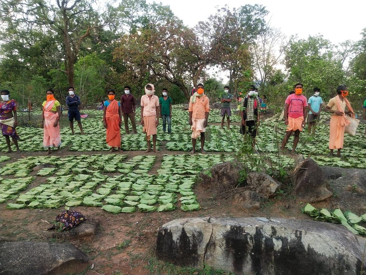 छत्तीसगढ़ के जंगलों में हरा सोना कहे जाने वाले तेंदूपत्ता का रिकॉर्ड उत्पादन