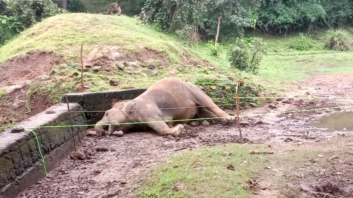उमरिया: करंट की चपेट में आने से मादा हाथी की मौत