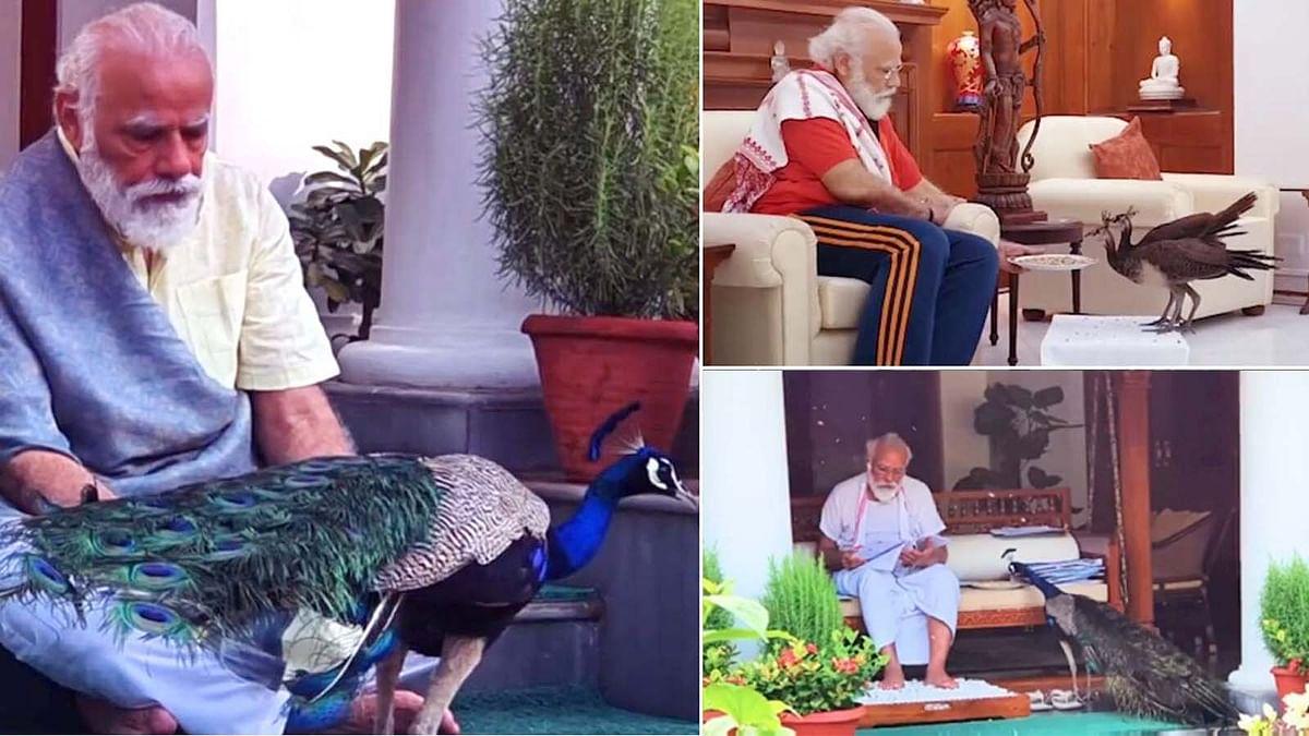 PM मोदी ने मोर प्रेम का शेयर किया बेहद दिलचस्प वीडियो