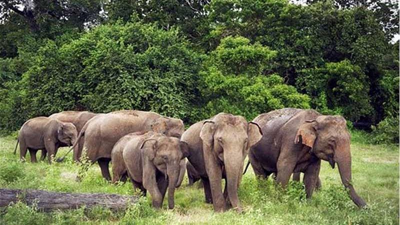 शहडोल : हाथियों का झुंड फिर पहुंचा गोदावल