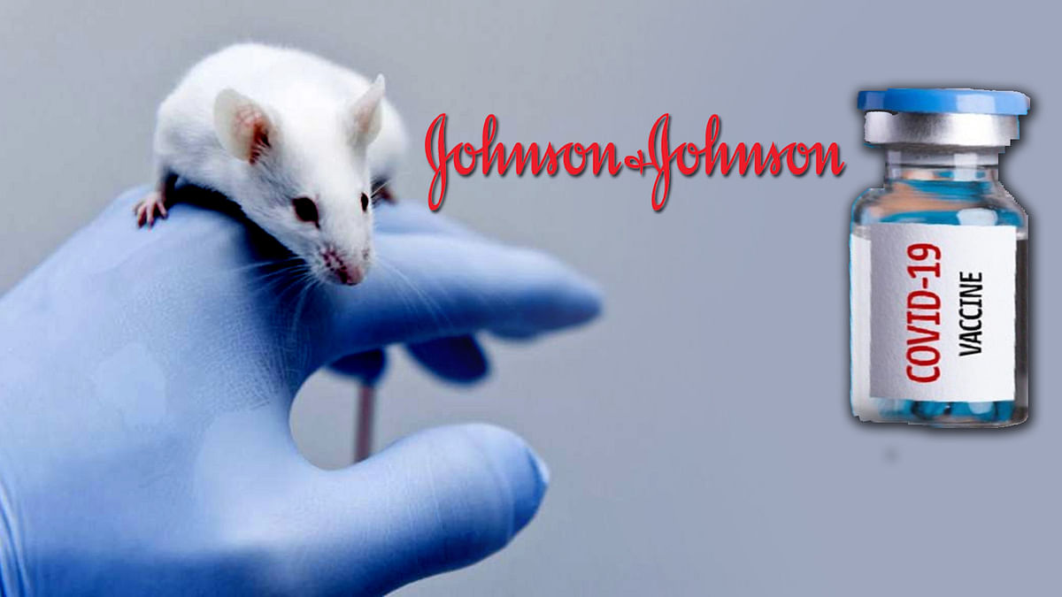 Johnson and Johnson Caccine Trial Succeeded on Rats