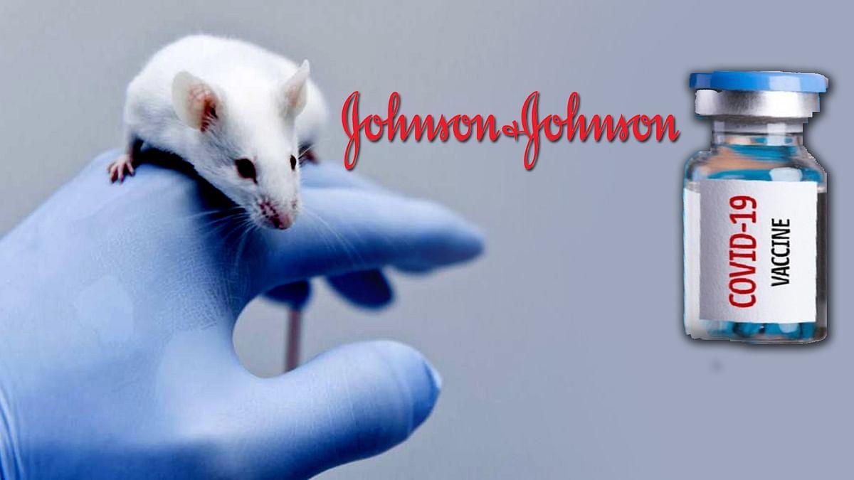 चूहों पर सफल रही Johnson & Johnson की कोरोना वैक्सीन