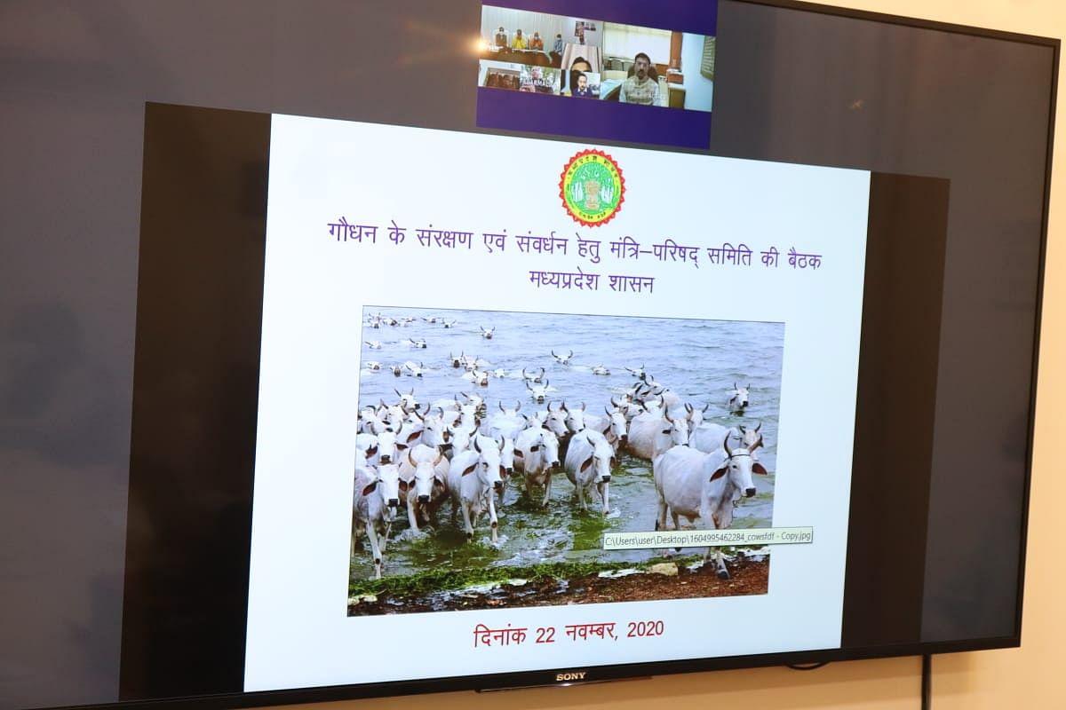 शुरू पहली गौ कैबिनेट बैठक, CM ने कहा- बड़ी संख्या में बनाई जाएंगी गौशालाएं