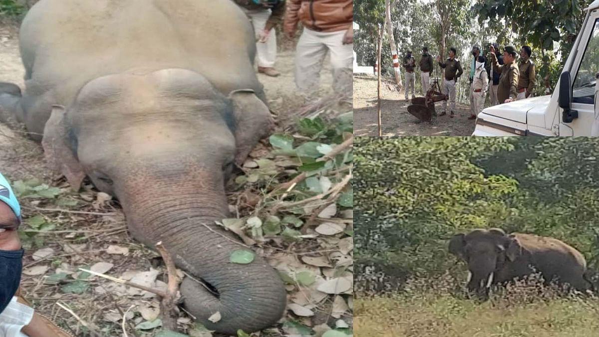 करंट से हाथी की मौत के बाद आक्रामक हुआ दूसरा हाथी, ग्रामीणों पर किया हमला