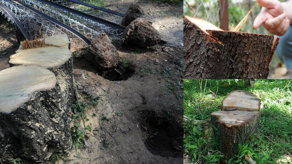 भोपाल : पुलिस के नाक के नीचे से बड़े अधिकारी के घर से 'चन्दन का पेड़' चोरी