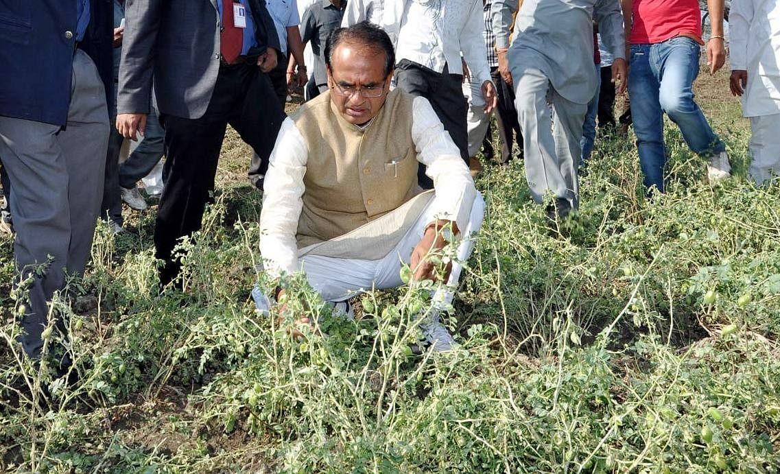 शिवराज का राष्ट्रीय स्तर पर किसानों के सर्वमान्य नेता के रूप में बढ़ रहा कद
