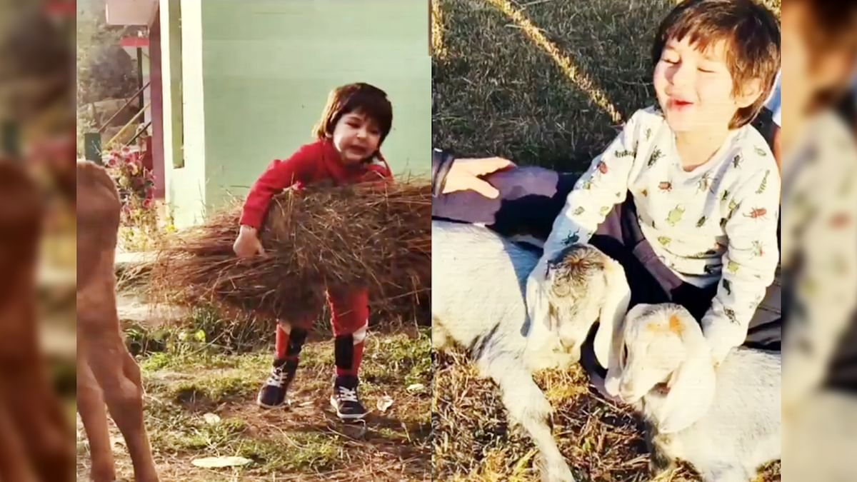तैमूर के बर्थडे पर करीना ने शेयर किया वीडियो, गाय को चारा खिलाते आए नजर