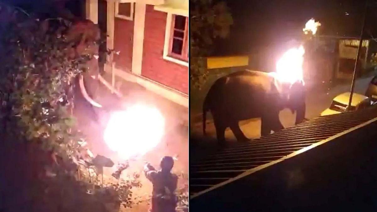 तमिलनाडु: लोगों की क्रूरता से जिंदा जले हाथी की मौत मामले का ताजा अपडेट