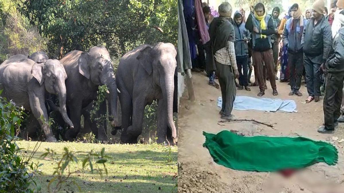 सीधी में जंगली हाथियों का आतंक, तीन लोगों को कुचलकर उतारा मौत के घाट