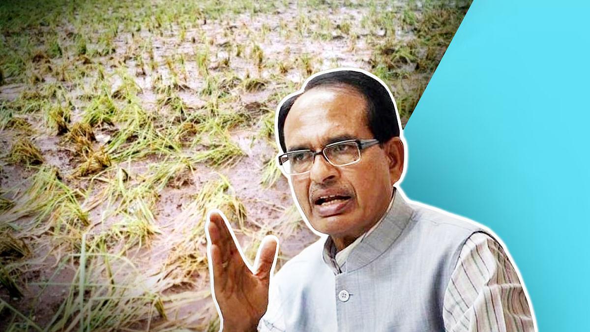 सीएम शिवराज का बयान-बरसात से फसलों को पहुंचे नुकसान का किया जा रहा है सर्वे