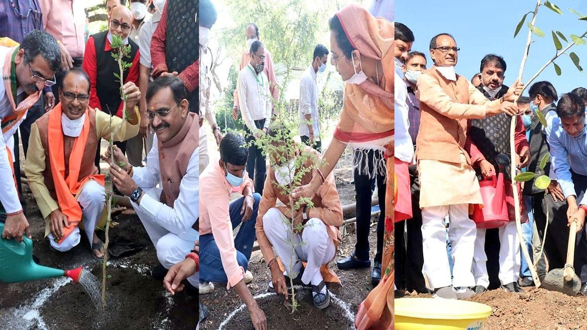 भोपाल: आज अपने जन्मदिन के अवसर पर 'सीएम शिवराज' ने कई स्थानों पर लगाए पौधे