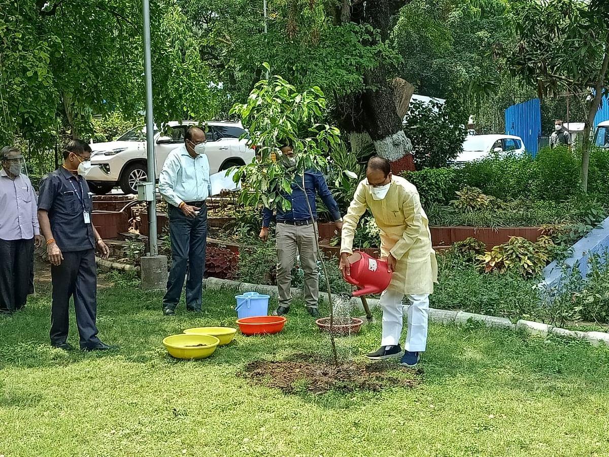 आज सीएम शिवराज ने लगाया मौलश्री का पौधा, ट्वीट कर कहा आप भी पौधे रोपिये