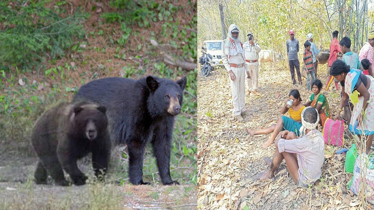 महुआ बीनने गए दंपती पर 2 भालुओं ने किया हमला- ग्रामीणों में दहशत का माहौल