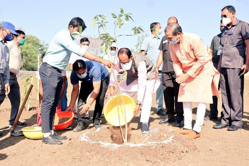 भोपाल: आज सीएम शिवराज ने स्मार्ट सिटी पार्क में लगाया सप्तपर्णी का पौधा