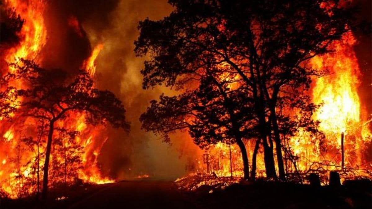उत्तराखंड के जंगल में धधक रही आग हुई विकराल- अब सरकार ने दिए ये निर्देश