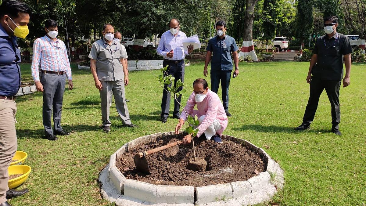 सीएम शिवराज ने 'वन प्लांट अ डे' की कड़ी में आज आवास पर लगाया करंज का पौधा