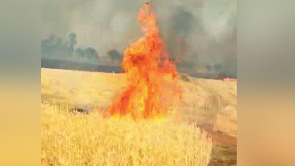 अशोकनगर: गेहूं की खड़ी फसल में अचानक लगी भीषण आग, फसल बचाने में झुलसा किसान