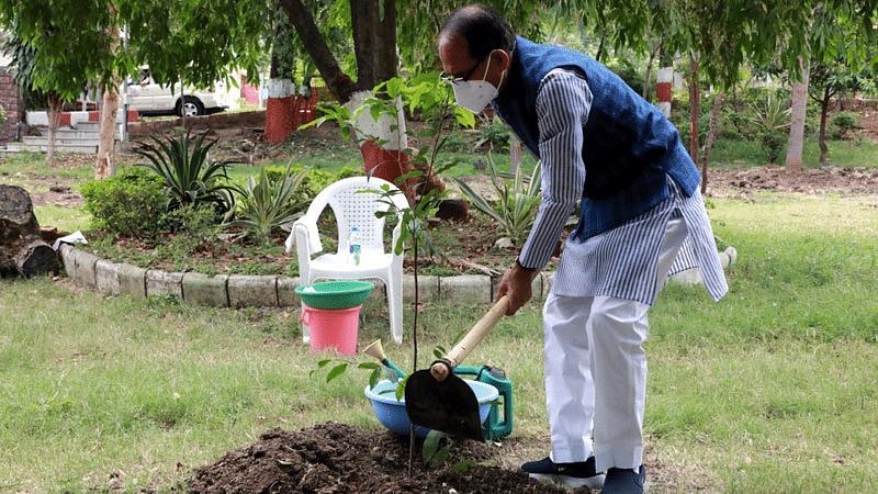 भोपाल: सीएम शिवराज ने मुख्यमंत्री निवास में किया मौलसिरी का पौधारोपण