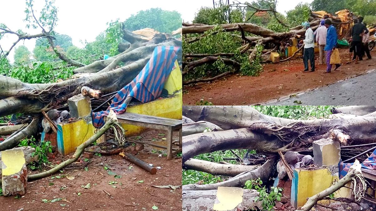 हरदा: नौतपा के तीसरे दिन हुई तेज बारिश, छिदगांव में पेड़ गिरने से एक की मौत