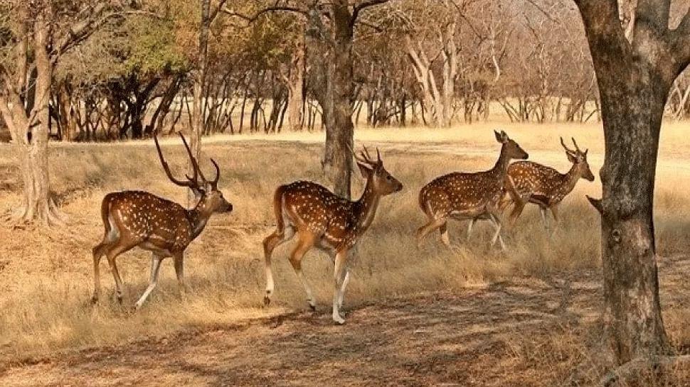 डेजर्ट नेशनल पार्क में हिरण शिकार का मामला सामने आया